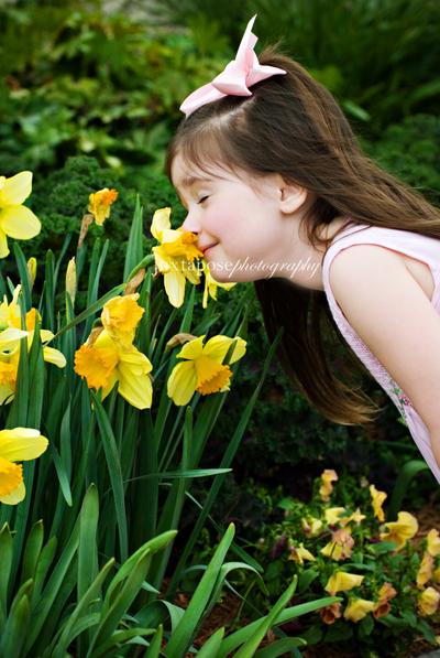 Daffodilycr