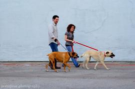 Dog_walkerscr